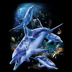 делфини в ноща